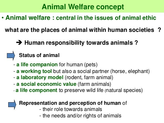animal rights versus animal welfare National animal interest alliance - the mission of naia is to promote the welfare of animals, animal rights, to strengthen the human-animal bond, and safeguard the.