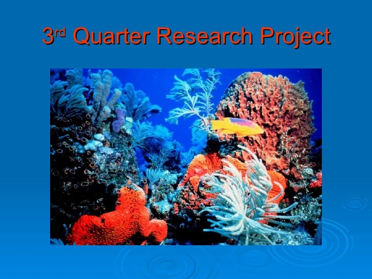 3 rd  Quarter Research Project