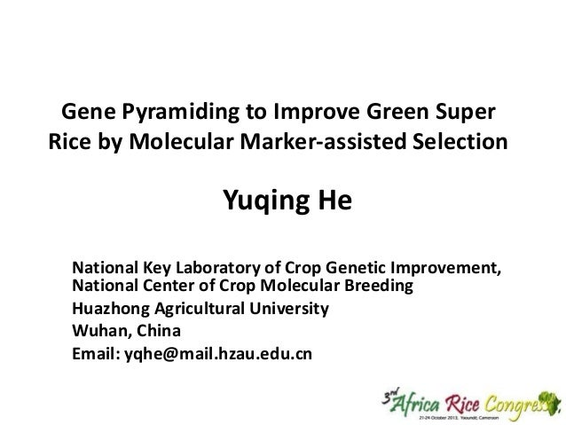 Gene Pyramiding to Improve Green Super Rice by Molecular Marker-assisted Selection  Yuqing He National Key Laboratory of C...