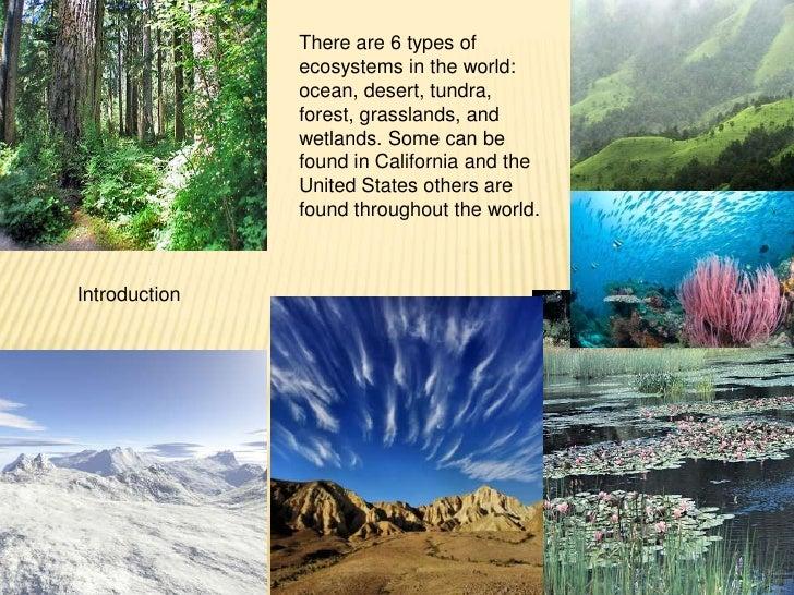 3rd grade ecosystem
