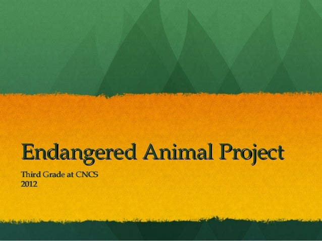 Endangered Animal ProjectThird Grade at CNCS2012