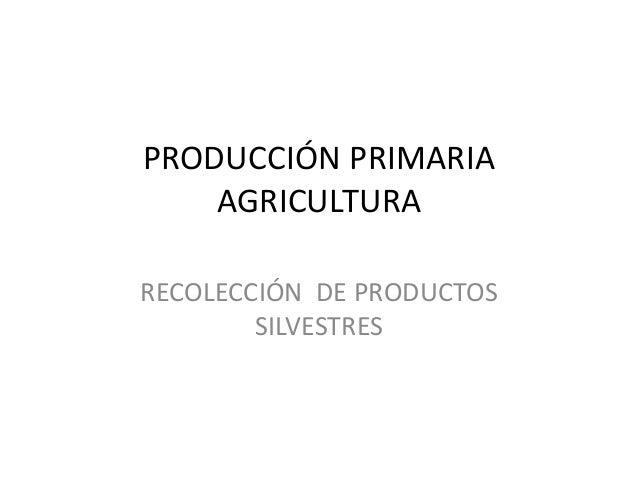 PRODUCCIÓN PRIMARIA AGRICULTURA RECOLECCIÓN DE PRODUCTOS SILVESTRES