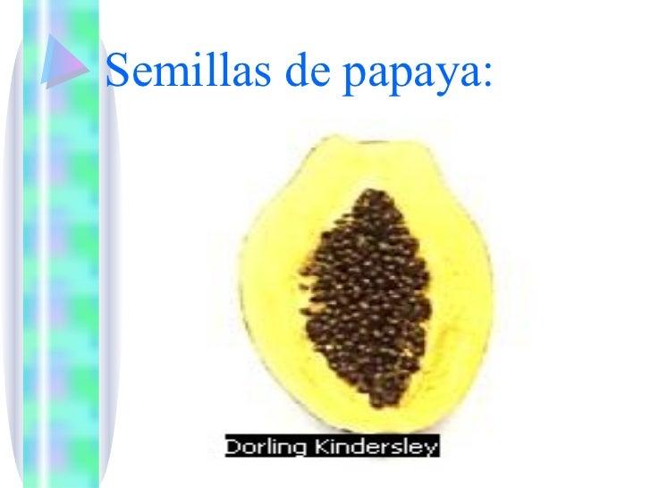 Reproduccion asexual de la papaya