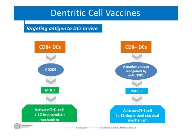Dentritic Cell Vaccines Targeting antigen to DCs in vivo CD8– DCsCD8+ DCs CD205 A marker antigen recognized by mAb 33D1 CD...