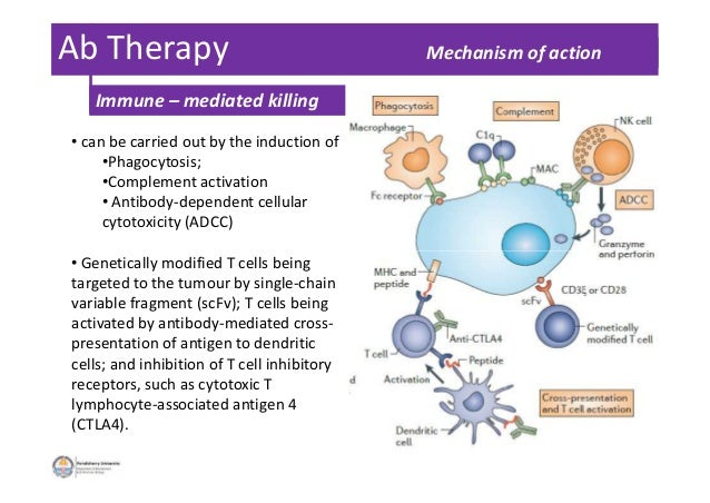 Ab Therapy Mechanism of action • can be carried out by the induction of •Phagocytosis; •Complement activation • Antibody-d...