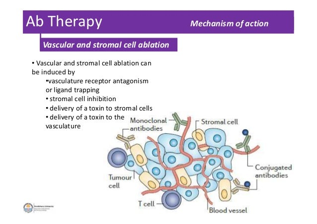 Ab Therapy Mechanism of action • Vascular and stromal cell ablation can be induced by •vasculature receptor antagonism or ...