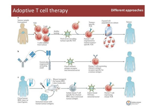 Adoptive T cell therapy Different approaches