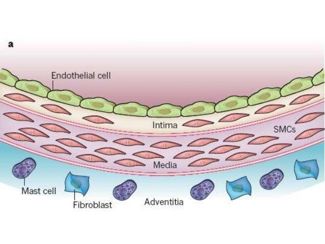 https://image.slidesharecdn.com/3sinergiainflamacin-dislipidemia-141013171044-conversion-gate01/95/sinergia-inflamacindislipidemia-en-la-aterognesis-3-638.jpg?cb=1413370959