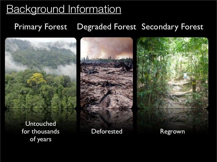 Deforestation (Selected solutions)