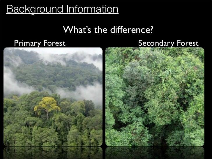 write about afforestation vs reforestation