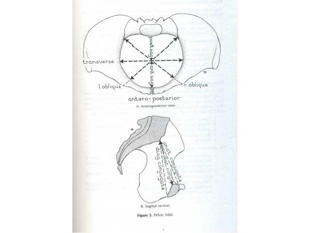 Các đường kính eo dướiCác đường kính eo dưới • Trước sau: 9,5 – 11,5cm • Ngang: – Khoảng cách giữa 2 ụ ngồi: 11 cm