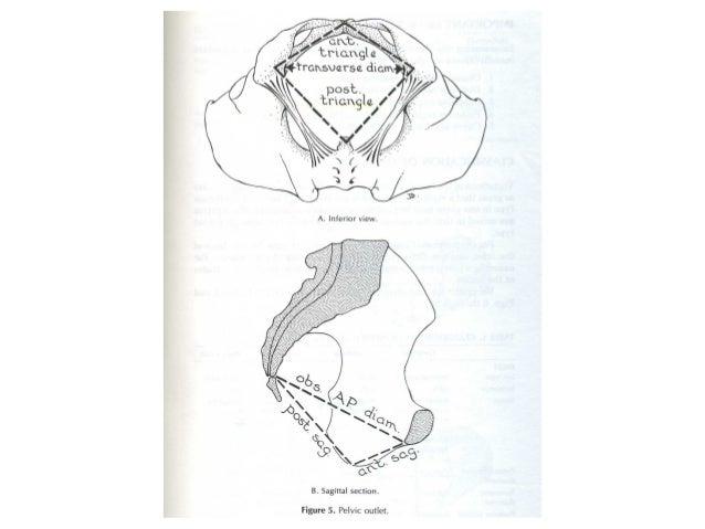 Phân loại khung chậu –Phân loại khung chậu – Ảnh hưởng lên chuyển dạẢnh hưởng lên chuyển dạ Phụ Nam Hầu Dẹt Đầu thai Lọt t...