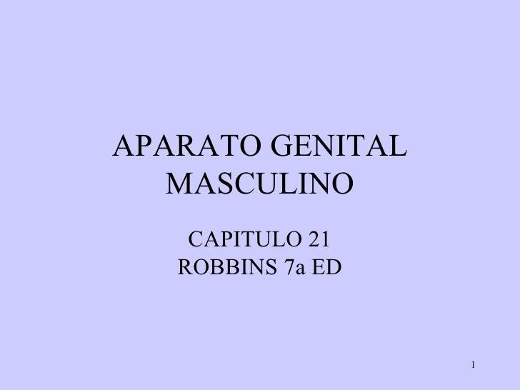 APARATO GENITAL MASCULINO CAPITULO 21 ROBBINS 7a ED