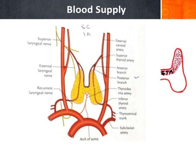 3 Thyroid Gland Final