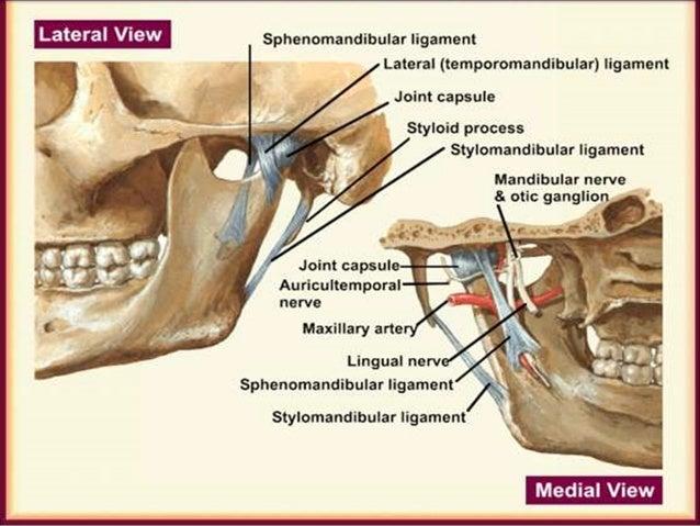 Image result for TMJ ligaments