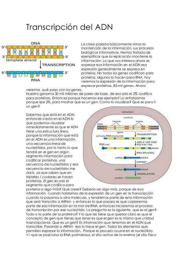 Transcripción del ADN La clase pasada básicamente vimos la mantención de la información, sus procesos biológicos informati...