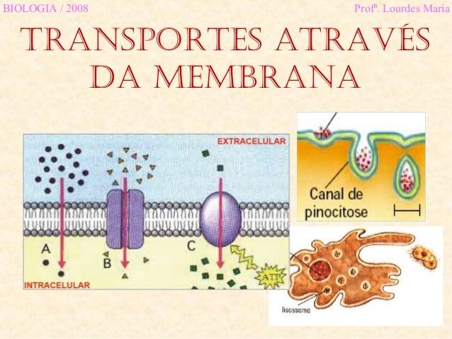 TransporTes aTravés da membrana BIOLOGIA / 2008 Profª. Lourdes Maria