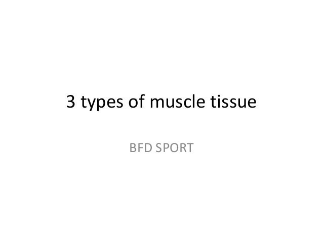 3 types of muscle tissue BFD SPORT
