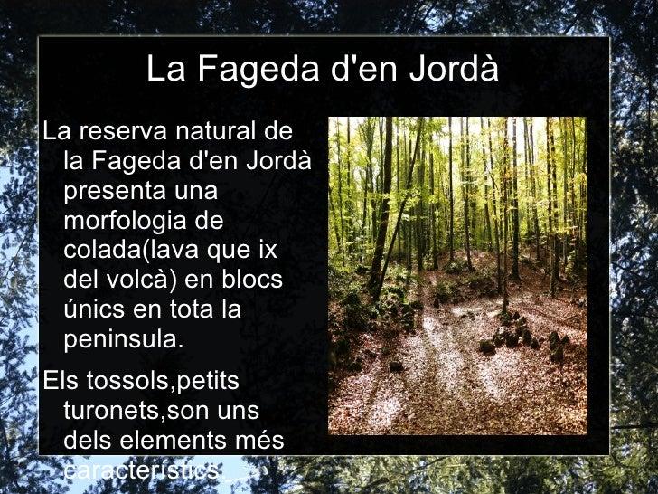 La Fageda den JordàLa reserva natural de la Fageda den Jordà presenta una morfologia de colada(lava que ix del volcà) en b...