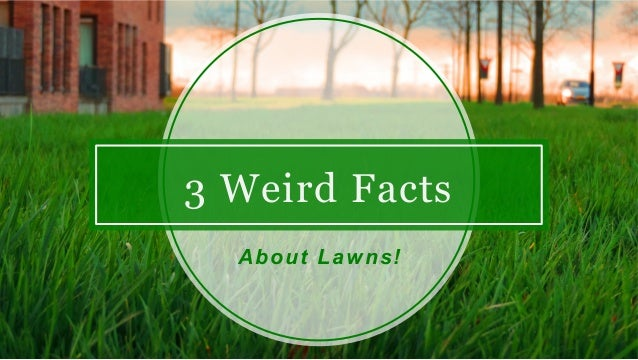 3 Weird Facts About Lawns!