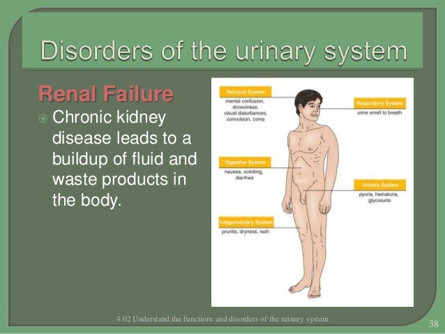 Functions and Disorders of Urinary System