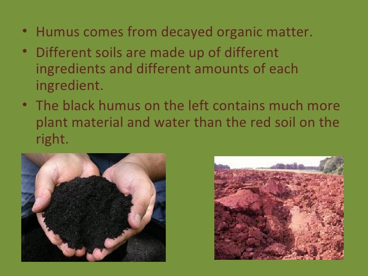 Decayed organic matter in the soil produces what