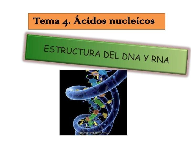 Tema 4. Ácidos nucleícos<br />ESTRUCTURA DEL DNA Y RNA<br />