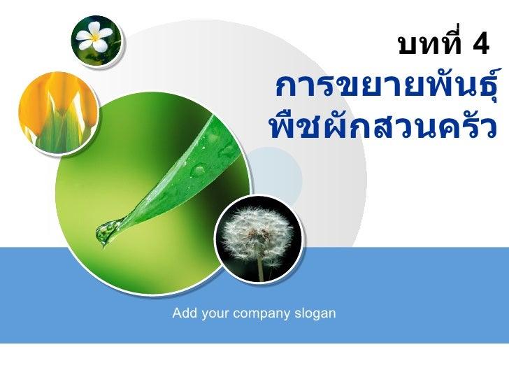 บทที่ 4 การขยายพันธุ์ พืชผักสวนครัวAdd your company ...