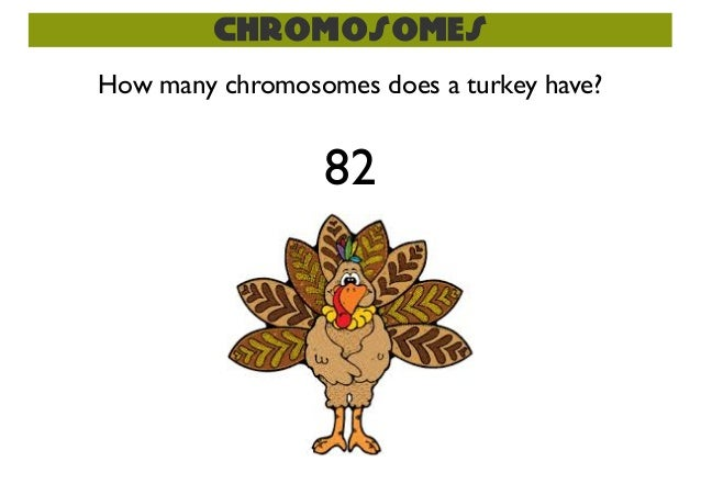how many sex cell chromosomes does a cat have in Chesapeake