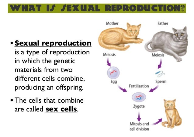 What is a sexual reproduction picture 83