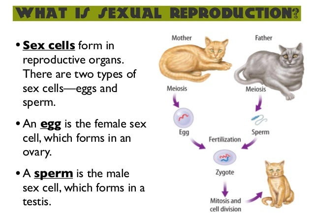 What is an organism sexually
