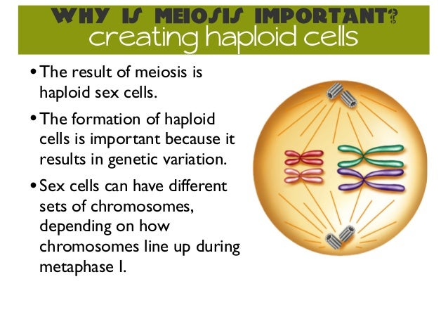 How does meiosis maintain sex cells