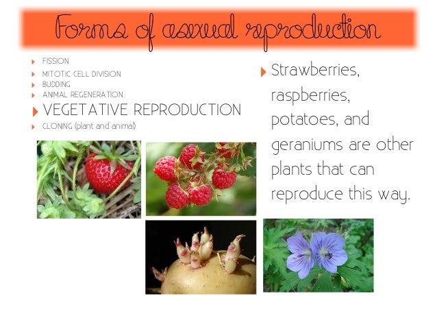 Strawberries reproduce asexually by using