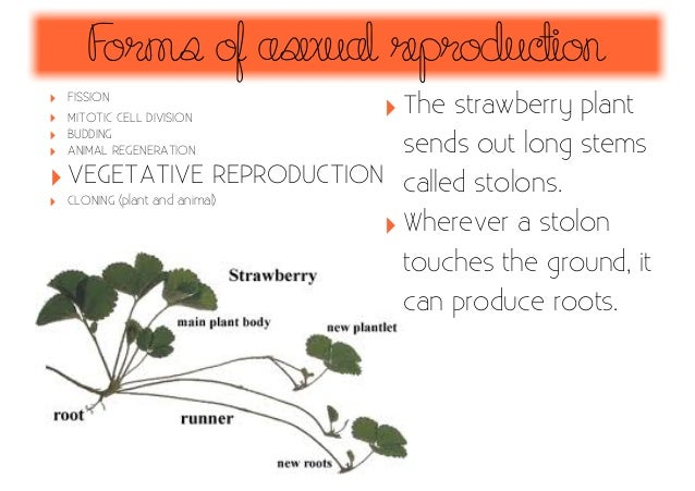How do plants reproduce asexually foto 36