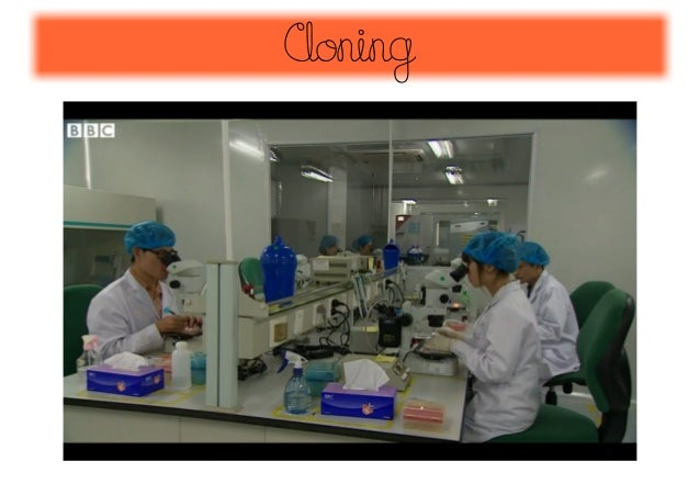 the ethical concerns about the possibility of human cloning Possible uses of animal cloning include:  animal cloning raises ethical issues  about how far humans should be allowed to interfere in the production of new life .