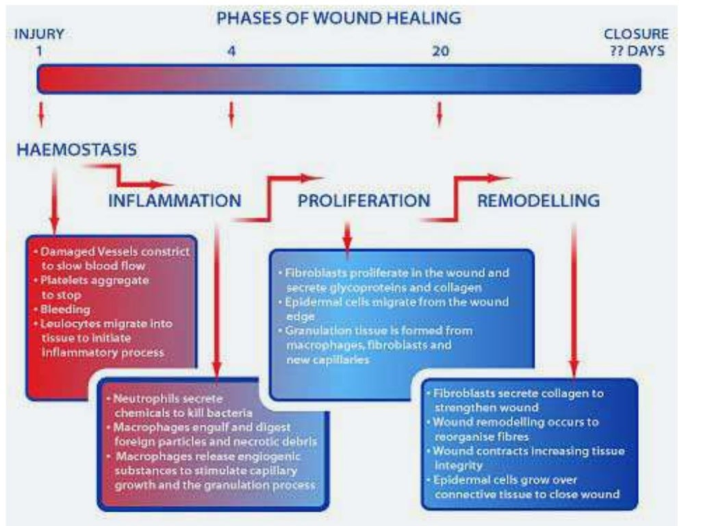 how nutrition affects wound healing Learn about the veterinary topic of factors that interfere with wound healing nutrition has a significant overall effect on the body.