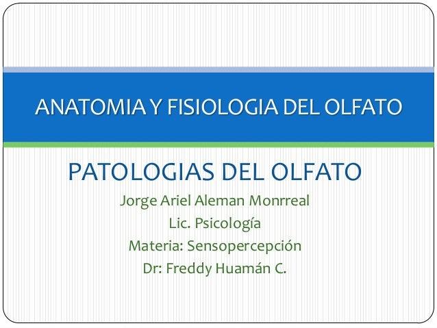 ANATOMIA Y FISIOLOGIA DEL OLFATO  PATOLOGIAS DEL OLFATO Jorge Ariel Aleman Monrreal Lic. Psicología Materia: Sensopercepci...