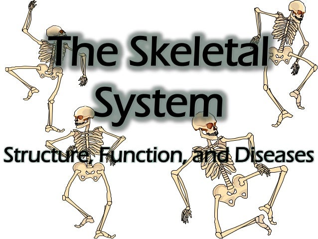 The Skeletal System Structure, Function, and Diseases