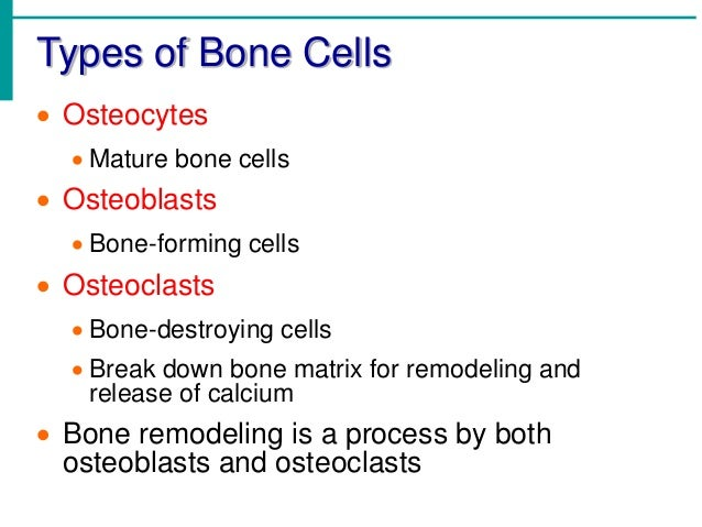 Mature bone cells