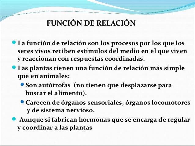 Relaci n en plantas for Funcion de las plantas ornamentales