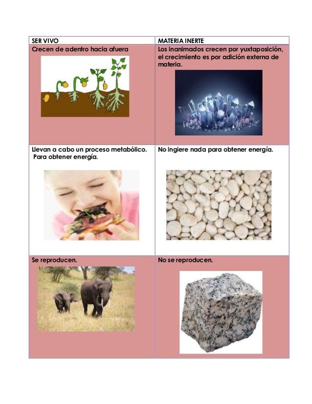 4. cuadro de diferencias entre un ser vivo y materia inerte