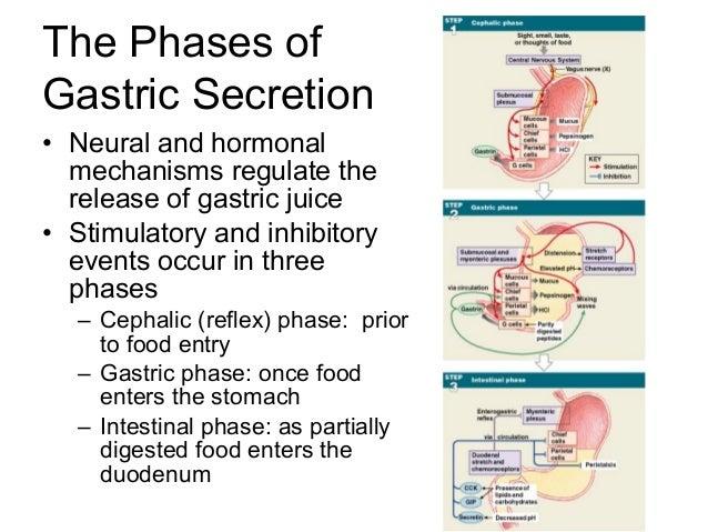 three phases of gastric secretion