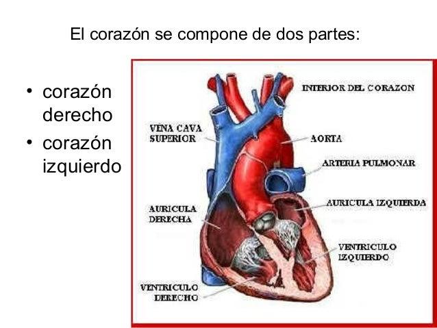 4.corazón
