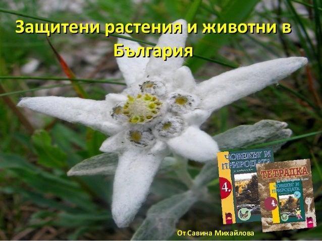 Защитени растения и животни вЗащитени растения и животни в БългарияБългария От Савина МихайловаОт Савина Михайлова