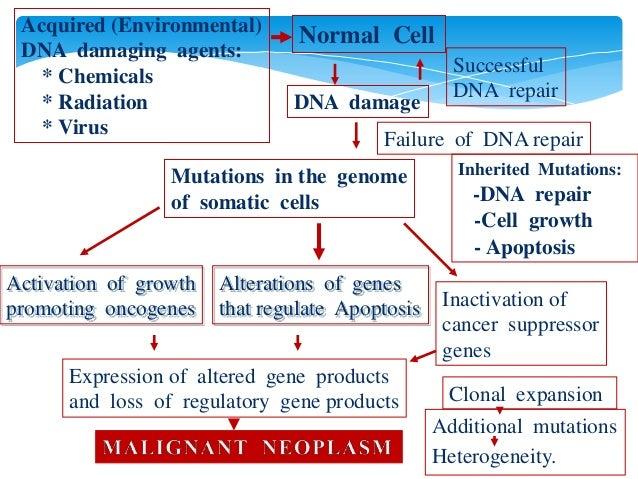 molecular basis of cancer essay Cellular / molecular basis: lung cancer has two types  lung cancer essay - lung cancer is the most common cancer-related cause.