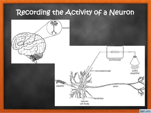 402 neurons brain chemistry and neurotransmission 12 ccuart Image collections