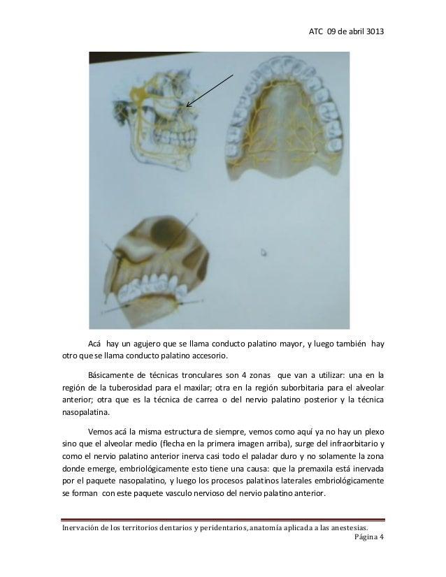 4. inervacion de los territorios dentarios y peridentarios. anatomia …