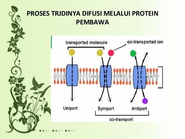 4 sistem transport melalui membran sel proses trjdinya difusi melalui protein pembawa ccuart Choice Image