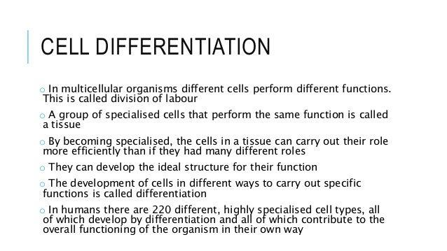 Printables Cell Differentiation Worksheet 4 unicellular multicellular cell differentiation differentiation