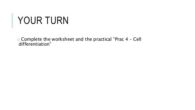 Printables Cell Differentiation Worksheet 4 unicellular multicellular cell differentiation leukaemi a 26